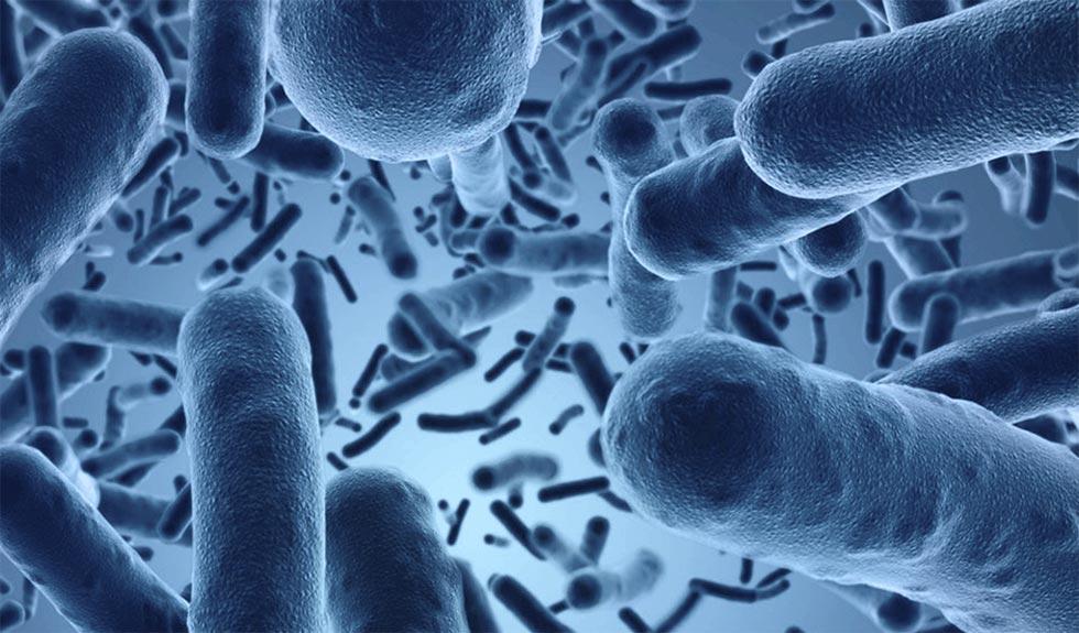 Bacterias en el intestino