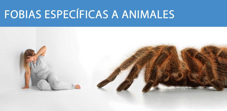 Fobias específicas a animales
