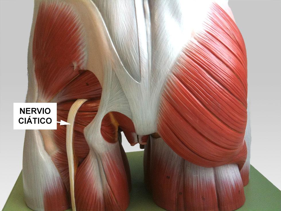 Cómo deshacerse de los calambres en las piernas remedios caseros