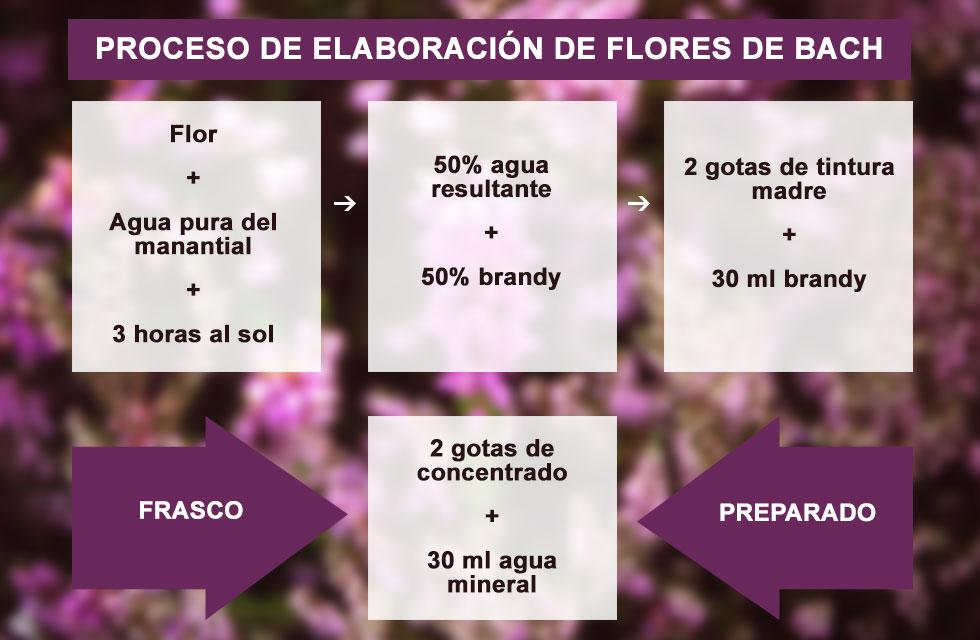 Proceso de elaboración de preparados florales - flores de bach