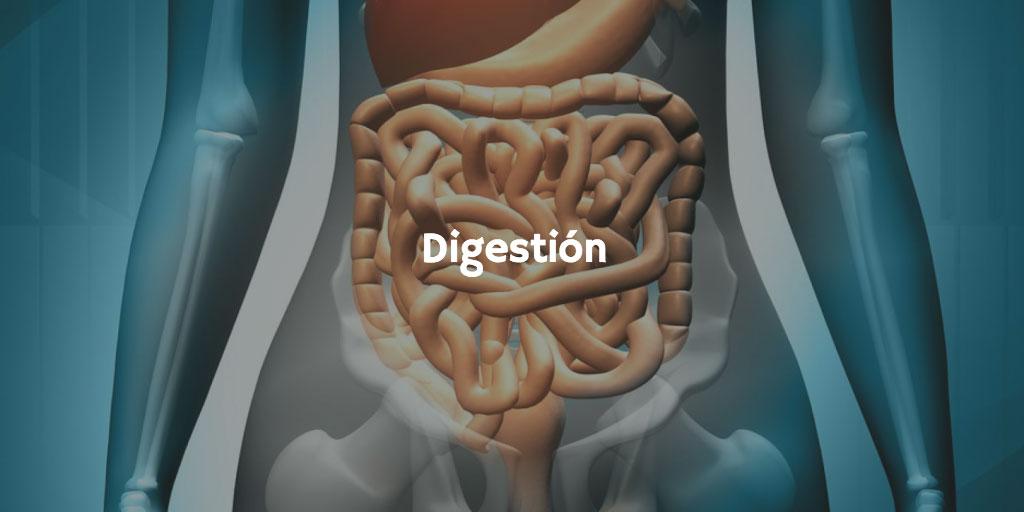 Sodio, calcio y potasio y sus propiedades saludables: digestión