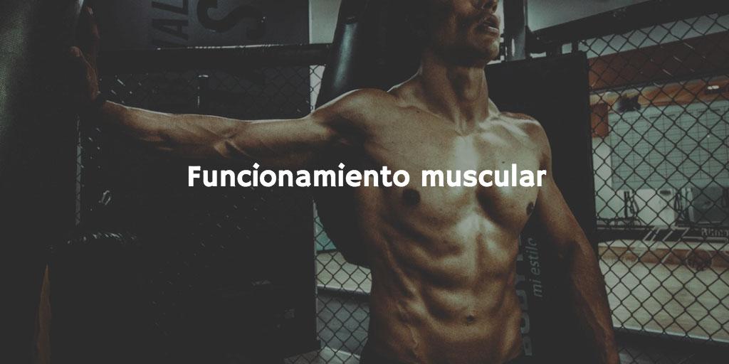 Sodio, calcio y potasio y sus propiedades saludables: funcionamiento muscular