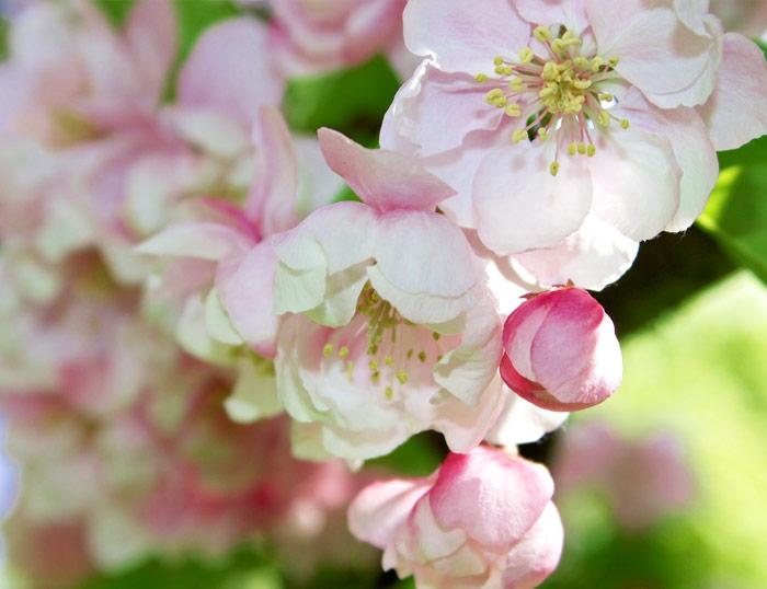 Aplicaciones locales de flores de bach