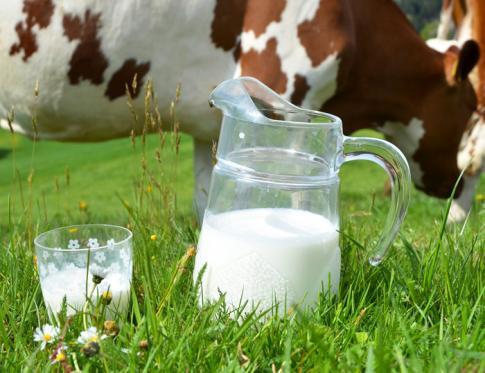¿Qué nos aporta la leche de vaca?