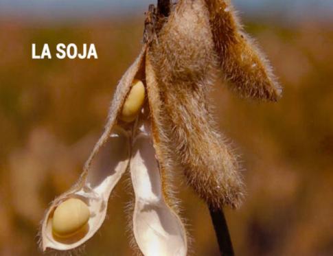 La soja y la salud