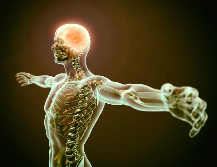 La Forma: implicaciones emocionales de nuestra constitución corporal