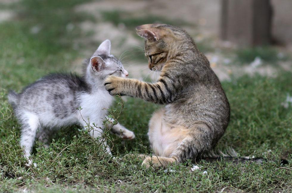 El juego es una acción instintiva que se presenta en muchas especies animales