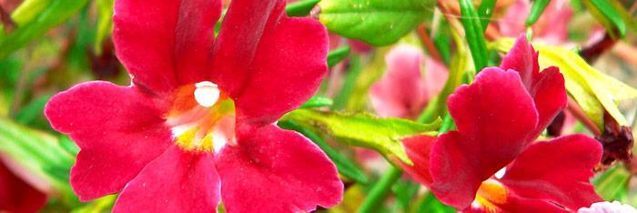 Flores de bach, ¿por qué funcionan?