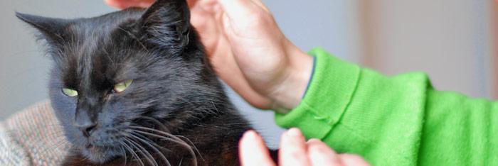 Reiki para los animales