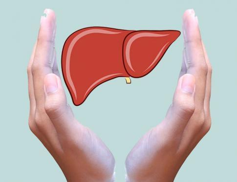 El hígado y sus funciones