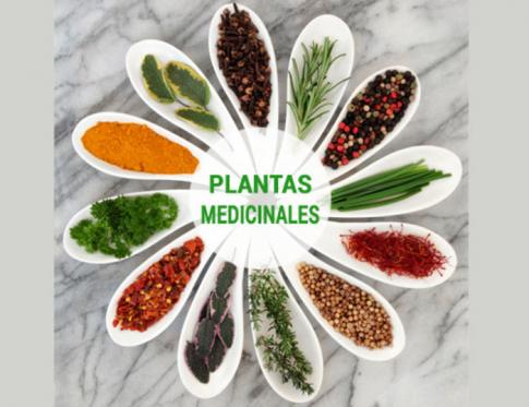 Aprende a utilizar las plantas medicinales.