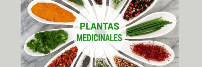 Aprender a utilizar las plantas medicinales