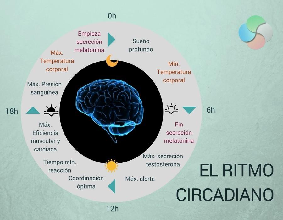 La influencia del ritmo circadiano