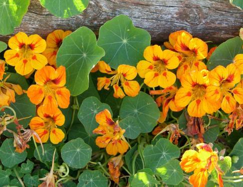 Los 7 grupos de flores de bach