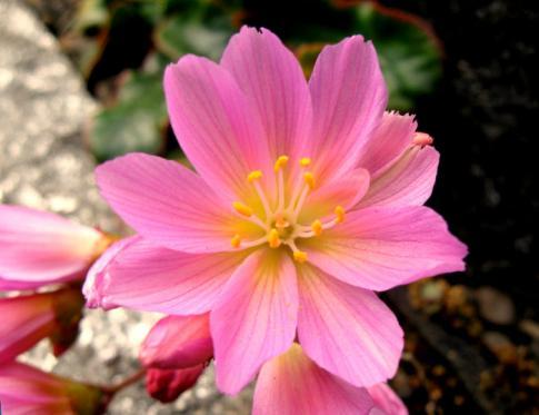 Despertándonos con flores de bach