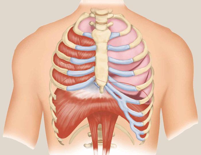 El diafragma y el dolor espalda