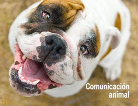 Comunicacion animal para sanar el alma