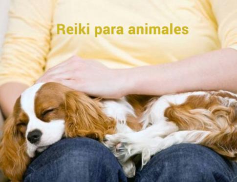 Aplicar Reiki en animales