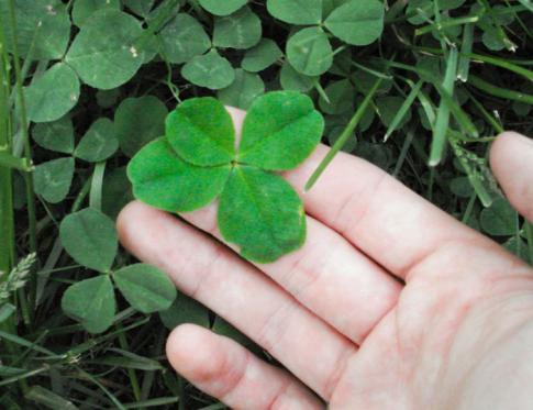 Aprende cómo atraer la buena suerte