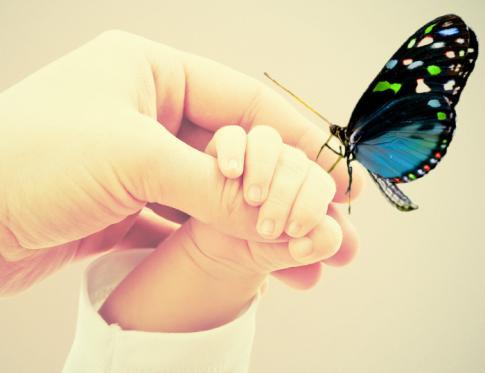 Metamorfosis o transformación