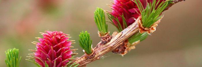 Las Flores de Bach, un proceso terapéutico