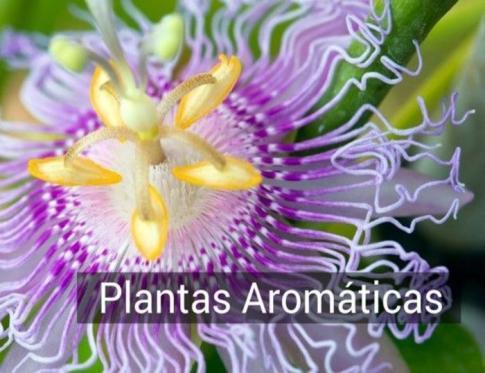 El uso de plantas aromaticas en vaporizadores