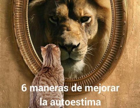 6 maneras de ver al le n en el espejo for Espejo que no se empana