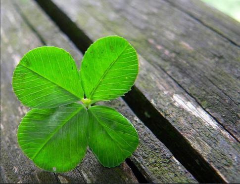 Aprende a tener suerte - 6 pasos