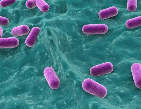 Vaginosis: desaparición de la bacteria lactobacillus de la vagina