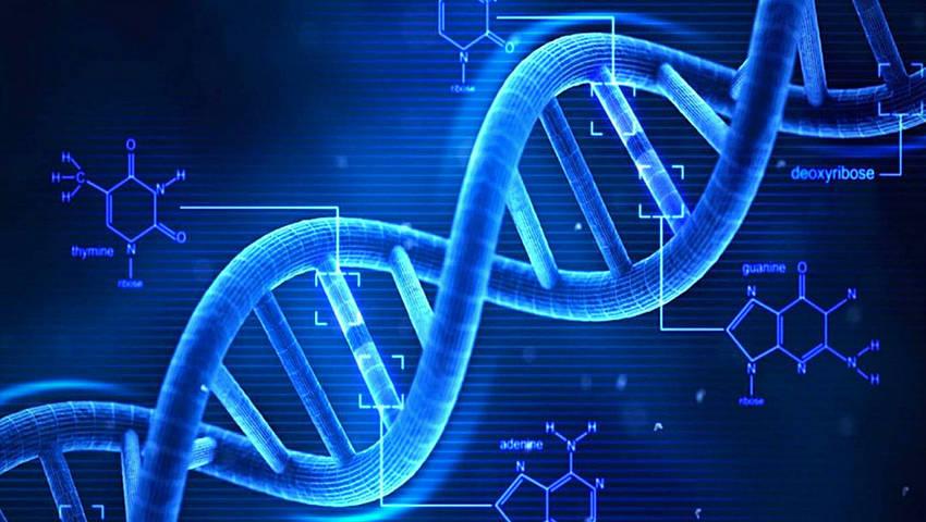 Existe una transmisión genética no solo física sino también de comportamientos y creencias