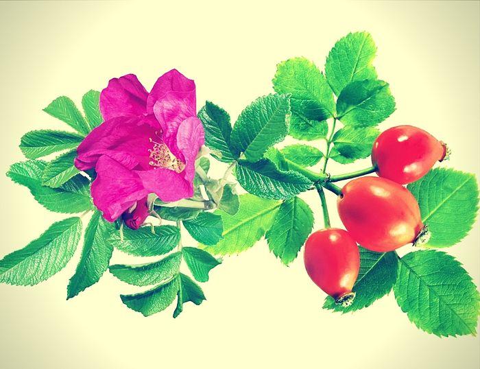 El aceite de rosa mosqueta proviene de la rosa rubiginosa