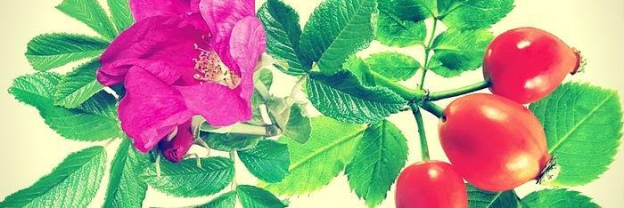 Descubriendo el aceite de Rosa Mosqueta