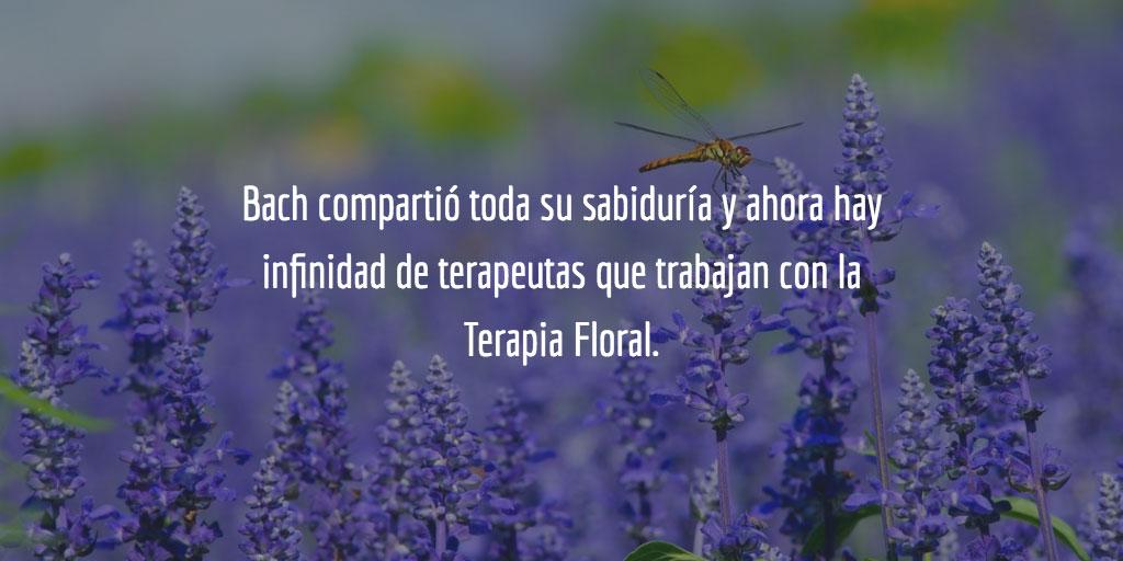 Bach compartió toda su sabiduría y ahora hay infinidad de terapeutas que trabajan con la Terapia Floral. Entre ellos tenemos a muchos psicólogos y médicos que lo que hacen es complementar sus tratamientos con las esencias florales.