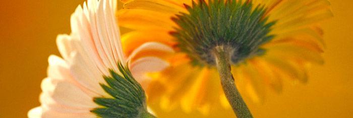 Selección de flores de bach según la terapia psicológica requerida