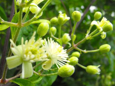 Terapias con Flores o Plantas