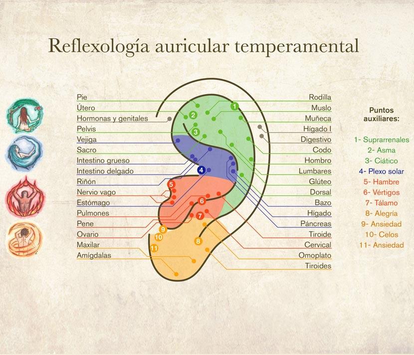 Reflexología - Beneficios y mapas de los puntos reflejos