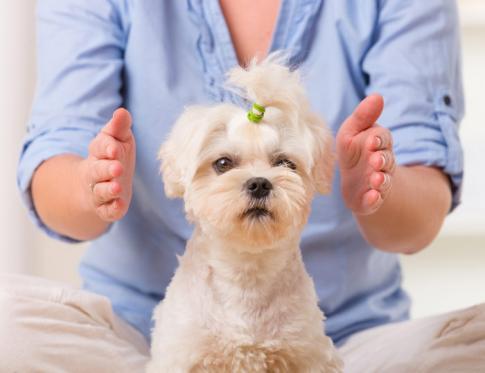 Qué son las Terapias para Animales
