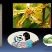 Curso de naturopatía integral aplicada - a distancia
