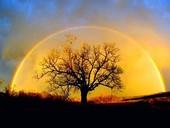 Creando abundancia, creando tu destino