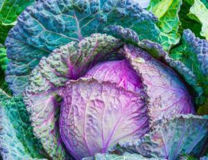 Curso online de alimentación consciente